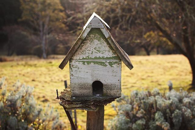 birdhouse-896259_640
