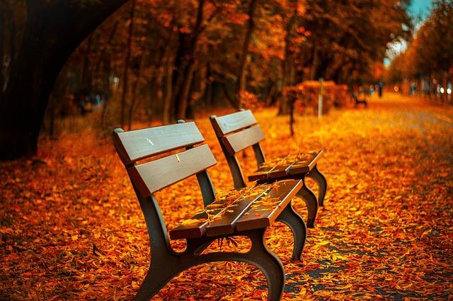 autumn_bench-560435_640