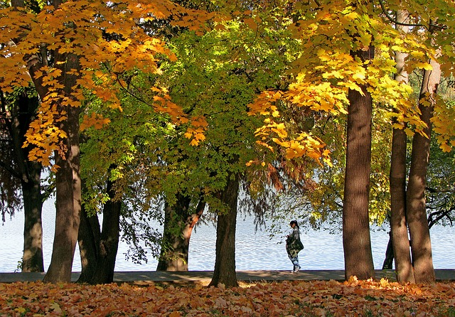 romania_autumn-landscape-1021513_640