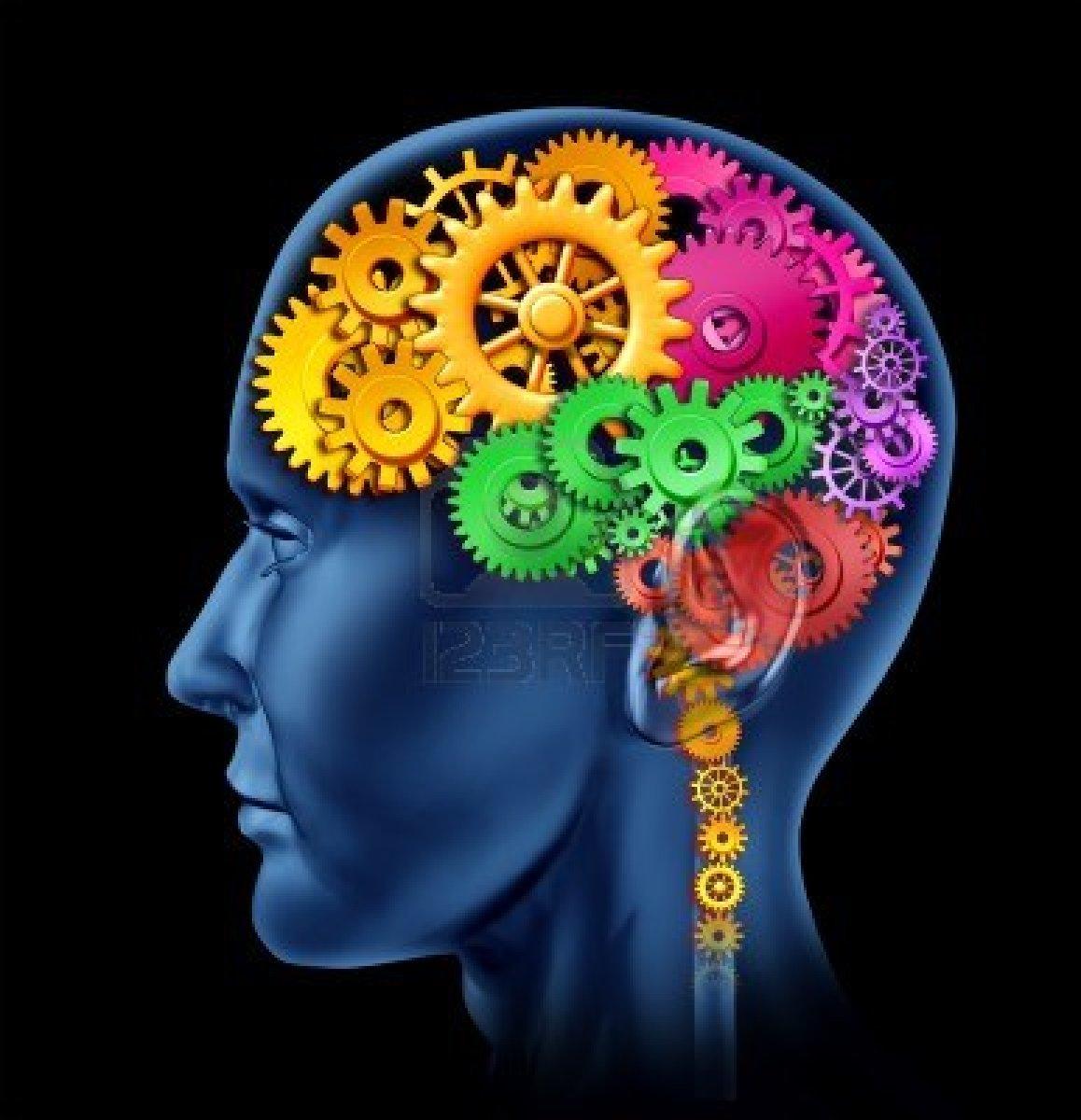 cerveau et langues