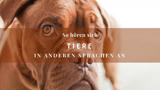 So hören sich Tiere in anderen Sprachen an