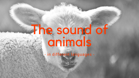 The sound of animals