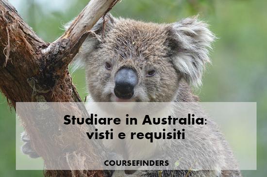 australia-koala-studiare