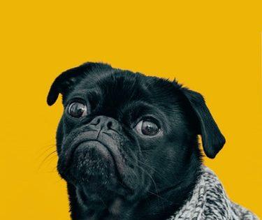 voce conhece Vocabulário de cachorro em inglês