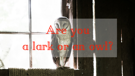 lark or owl Your brain works at an optimum level at some point during the day, categorizing you as either a lark, hummingbird, or owl the main difference between the bird types are when they feel energized to.
